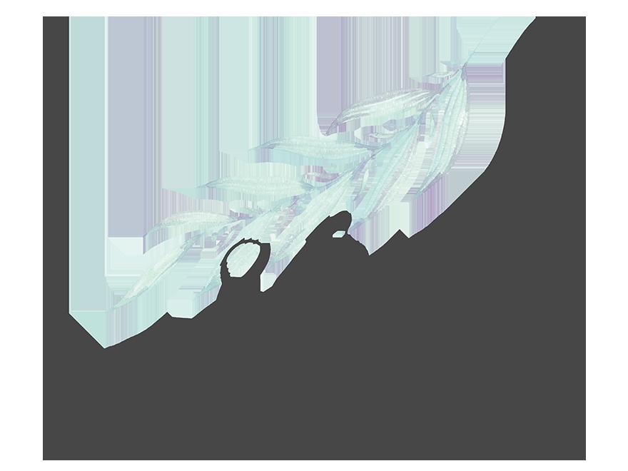 Shay Photography